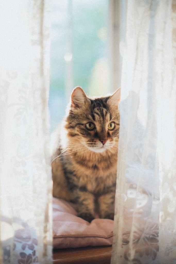 Cat, AT word